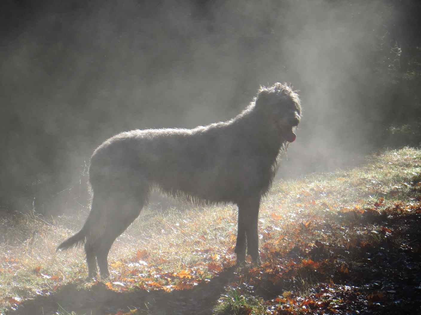 dogs in the mist 12-15 021